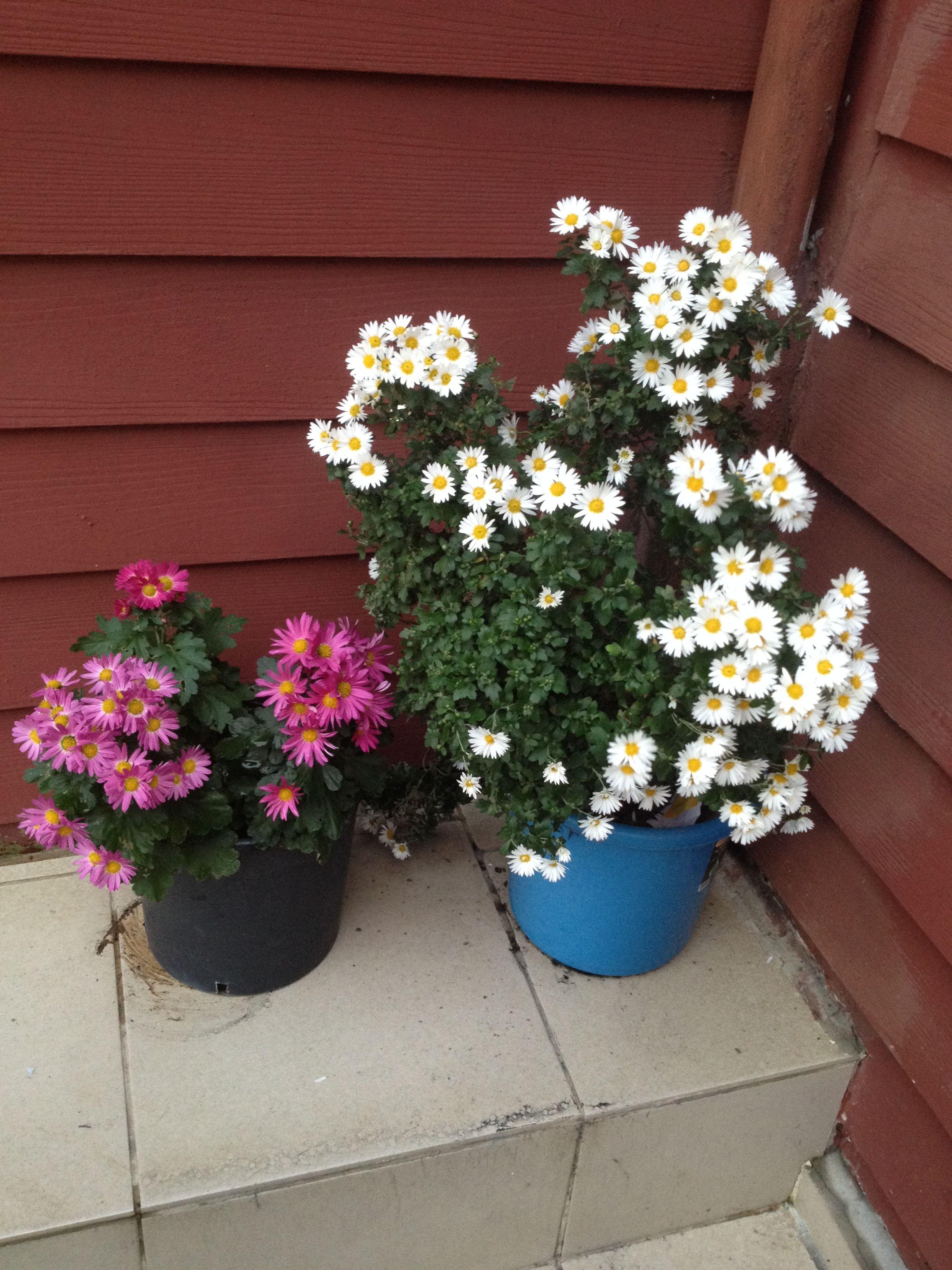 Nursel adlı kullanıcının çiçekler ️ panosundaki Pin Çiçek