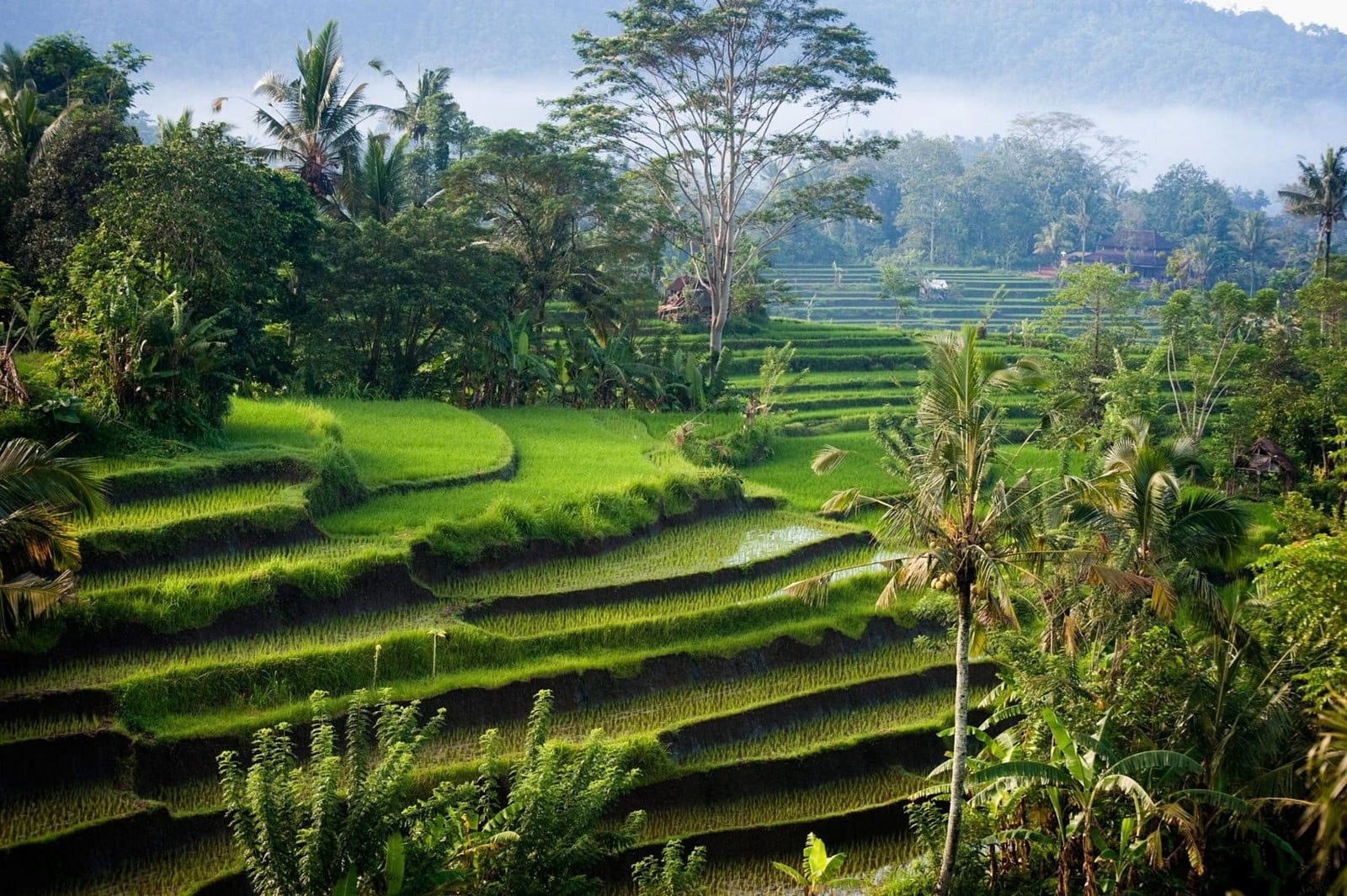 rice terraces nature landscape photography morning