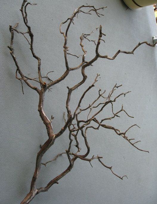 Branch Wall Art tree branch wall art.. add black and white photo hanging from a