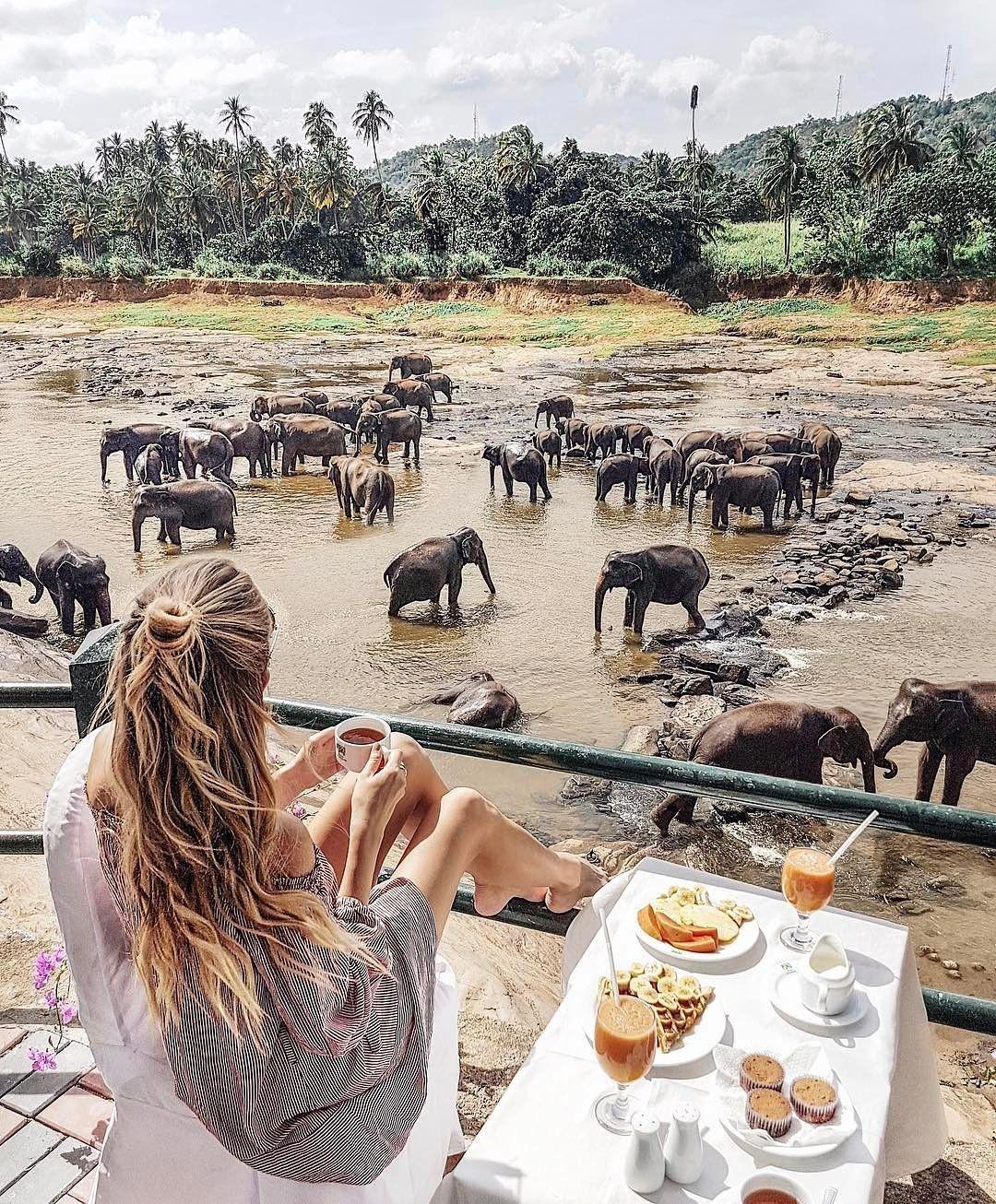 "14.7k Likes, 444 Comments - Bucket Listers (@bucketlisters) on Instagram: ""Is Sri Lanka on your bucket list? 🐘✔️ 📸:@ohhcouture 🌎Pinnawala Elephant Orphanage"""