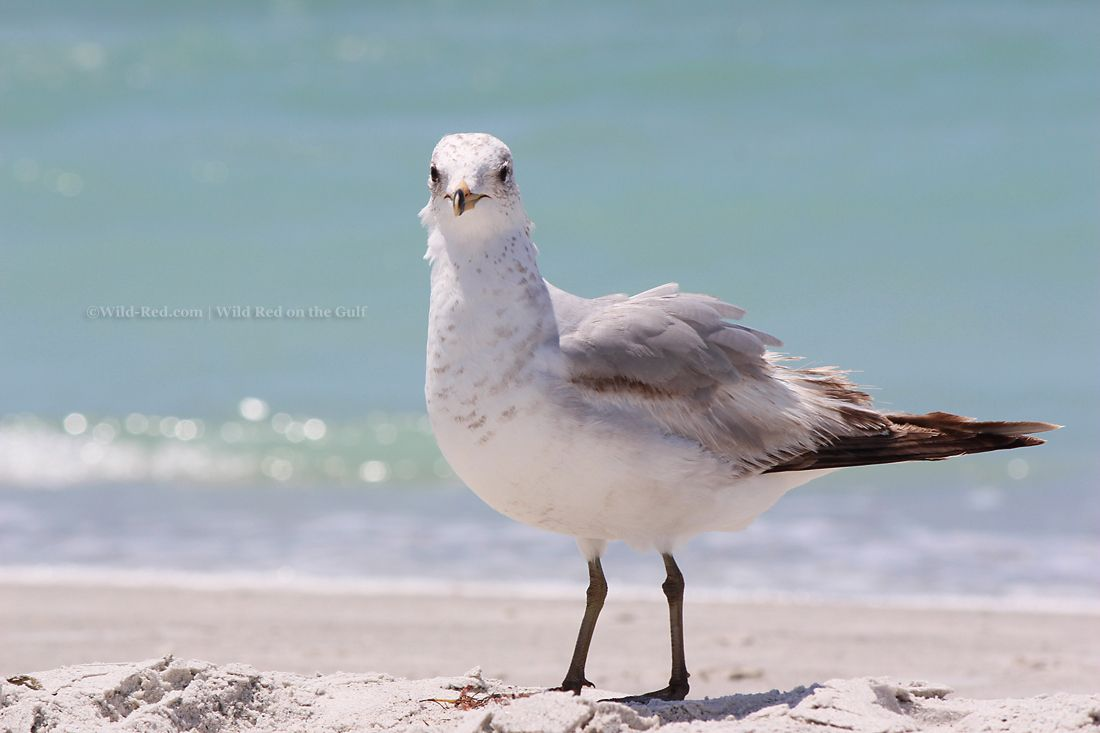 Sand Key Park- One of the best beaches in Clearwater Florida
