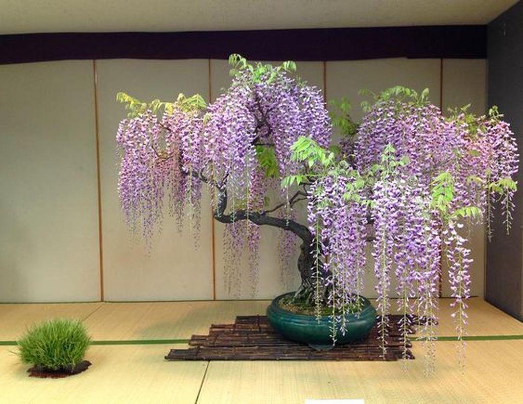 20+ #Stunning #Bonsai #Plant #Design #Ideas #For #Garden