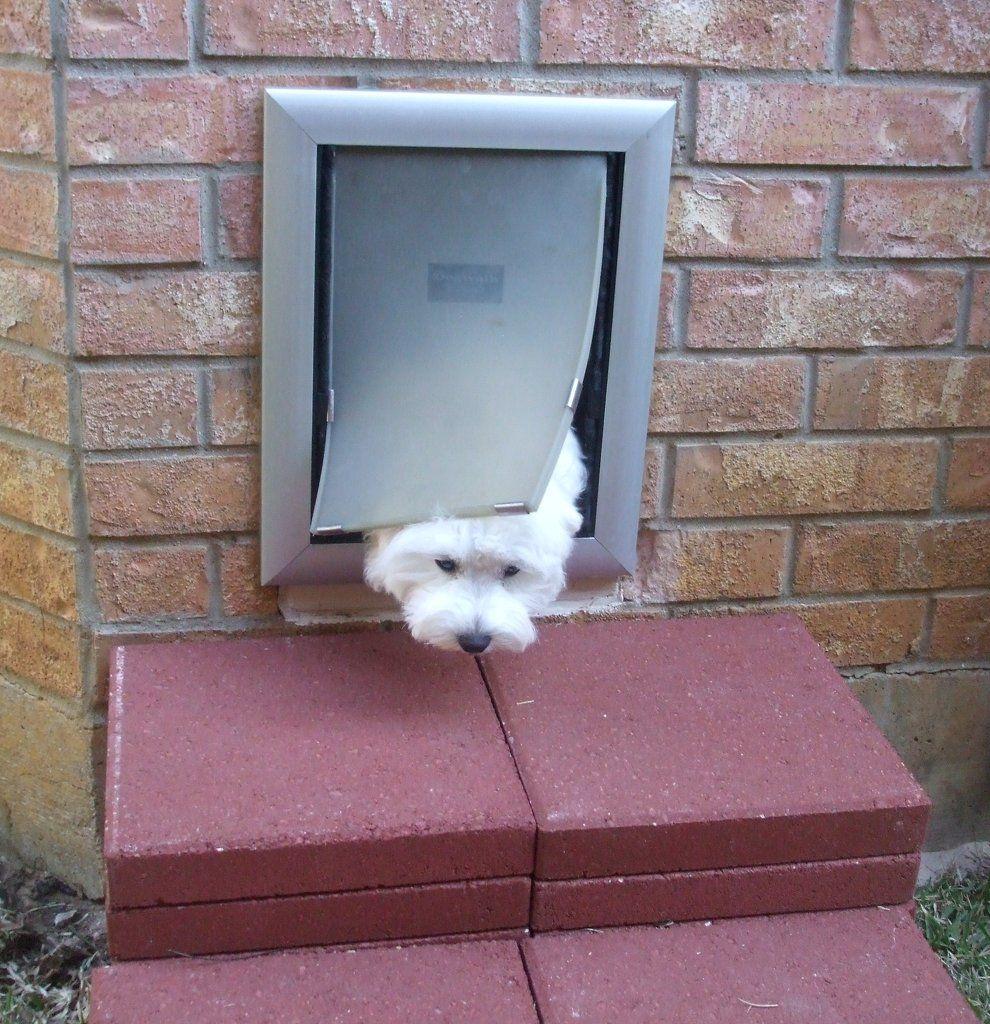 Cat Door Google Search Cat Doors Pinterest Doors And Cat