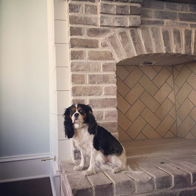 #fieldtripfriday at CDG!! No CDG home is complete without a dog curled up by the fireplace!  #cavalieratwork #cavaliersofinstagram #dogsofinstagram #dogsofclarkedesigngroup #texture #details #mantle #lowcountrystyle #lowcountry #loveit #myassistantisbetterthanyours