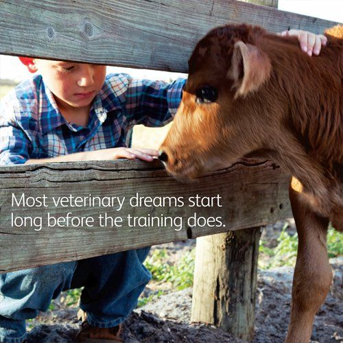 Most Veterinary Dreams Start Long Before The Training Veterinarymedicine Vet Student Veterinarian Quotes Pet Vet