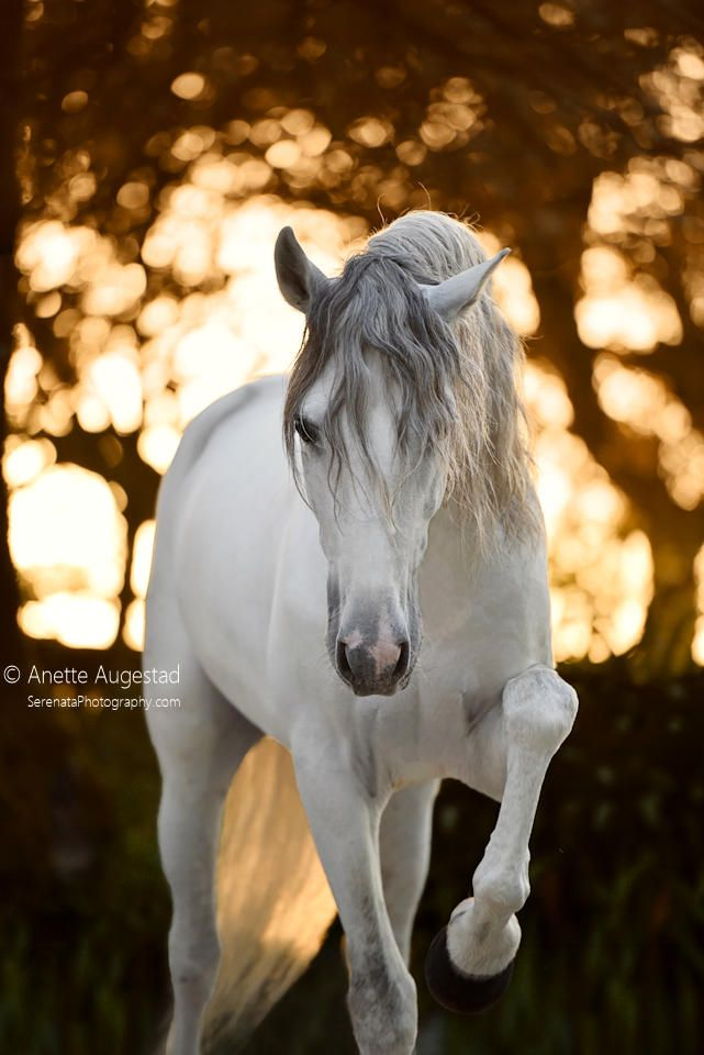 Photo of Fallen Pegasus by Hestefotograf on DeviantArt