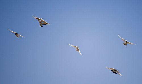 Birds Baghdad Sky The Sky Of Of Iraq Photography Rasoul Ali طيور سماء بغداد سماء العراق تصوير رسول علي Baghdad