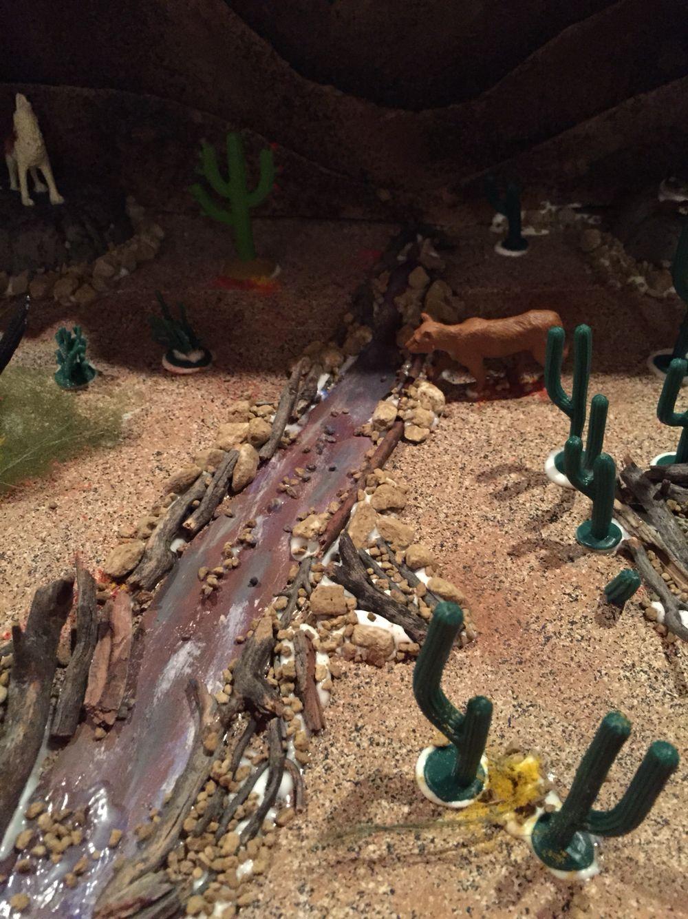More details of the desert ecosystem | Desert ecosystem ...