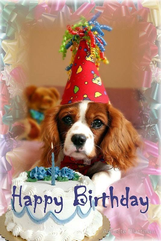 Happy Birthday Dog Images For Facebook