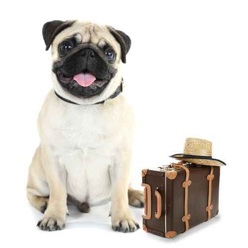 10 Tips For Moving With Pets Http Shannonanderson Com 10 Tips Moving Pets Pets Pet Home Moving Tips