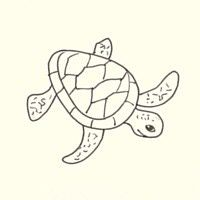 Draw A Sea Turtle In 3 Easy Steps With Images Turtle Drawing