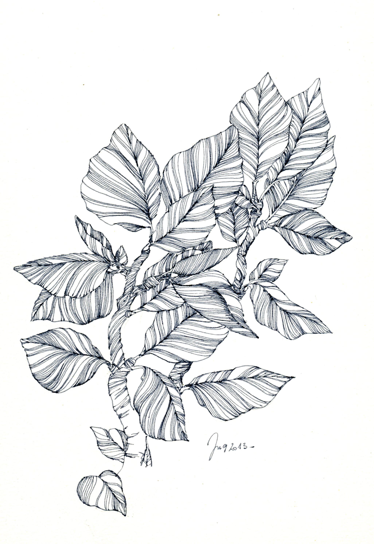 Zentangle Ideas Image By Valerie Ryan