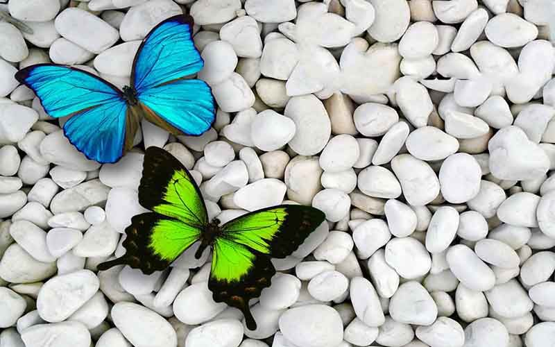 I Love You Hd Images Butterfly Wallpaper Butterfly Pictures Beautiful Butterfly Pictures Full hd butterfly stone wallpaper