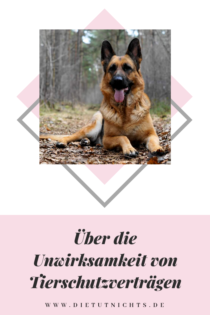 Uber Die Unwirksamkeit Von Tierschutzvertragen In 2020 Tierheim Hunde Tiere Hunde