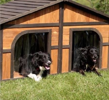 Doghouse For Large Breed Google Search Double Dog House