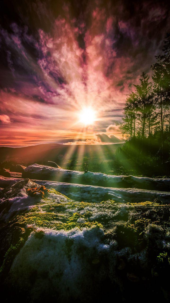 Sunbeam through Tree wallpaper x
