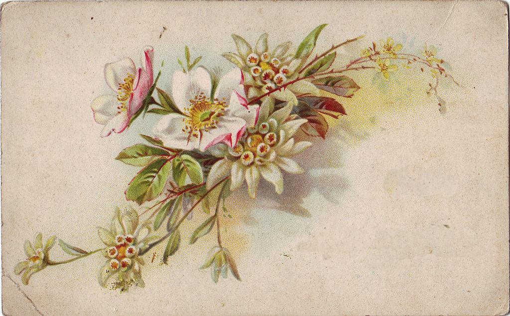 Flores vintage para imprimir buscar con google laminas - Laminas antiguas para cuadros ...