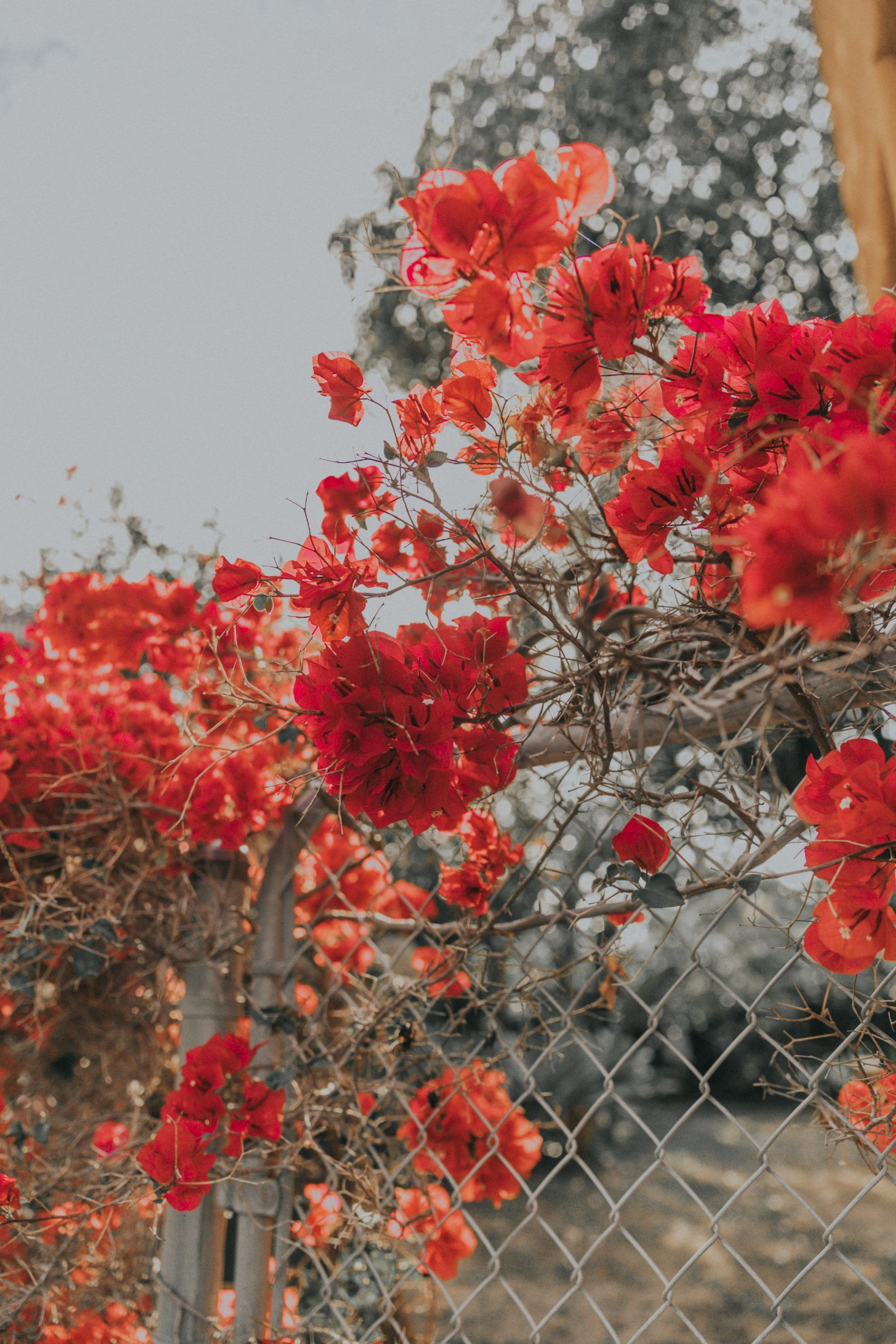 Hd wallpapers and background images Flowers Everywhere | Collage Vintage | Flower aesthetic ...