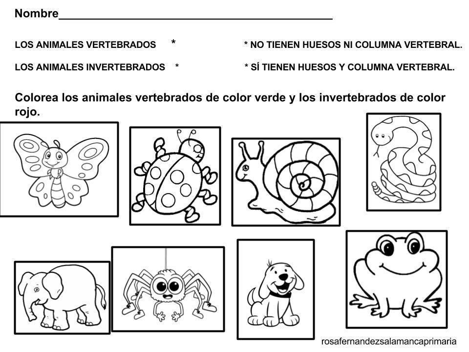 Animales Invertebrados Para Colorear Coloring Pages Science Fair Projects English Activities