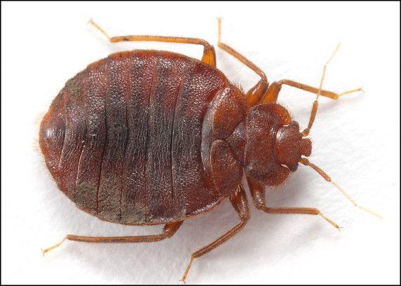 Does Bleach Kill Bed Bugs? More Info At Http://katelynalainstudio.com
