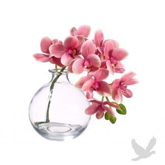 "10"" Pink Phalaenopsis Orchids in Glass Vase"
