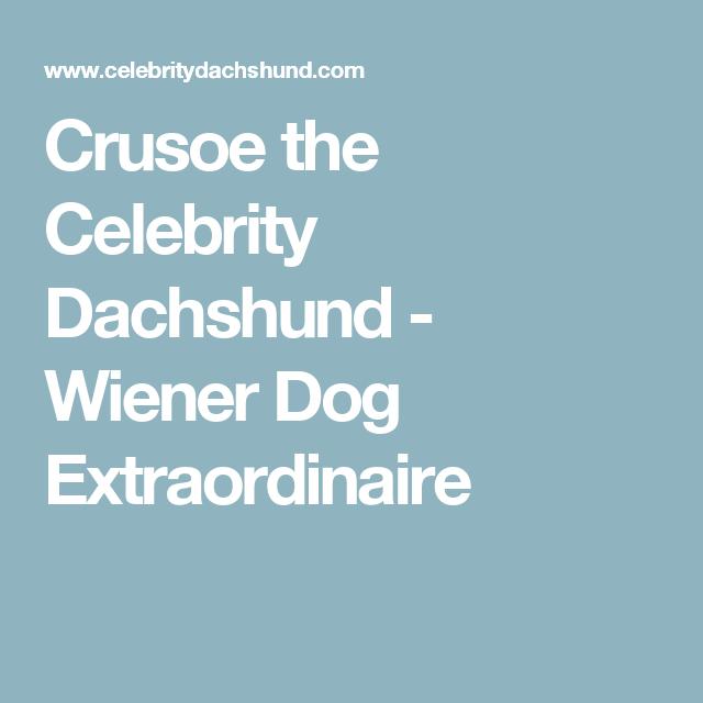Crusoe the Celebrity Dachshund - Wiener Dog Extraordinaire