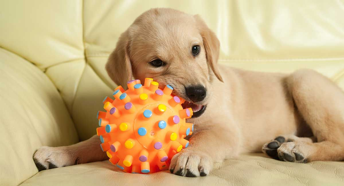 Best Moving Dog Toys For Pups Who Love To Play And Fetch Best