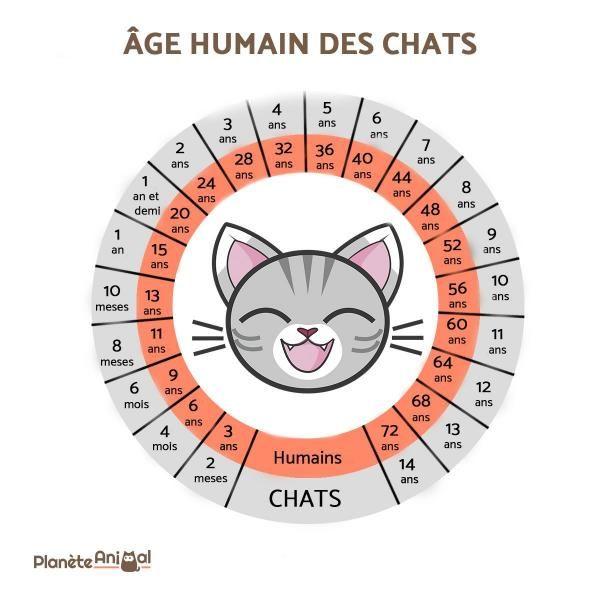 Photo of ¿Cómo calcular la edad de un gato en edad humana?