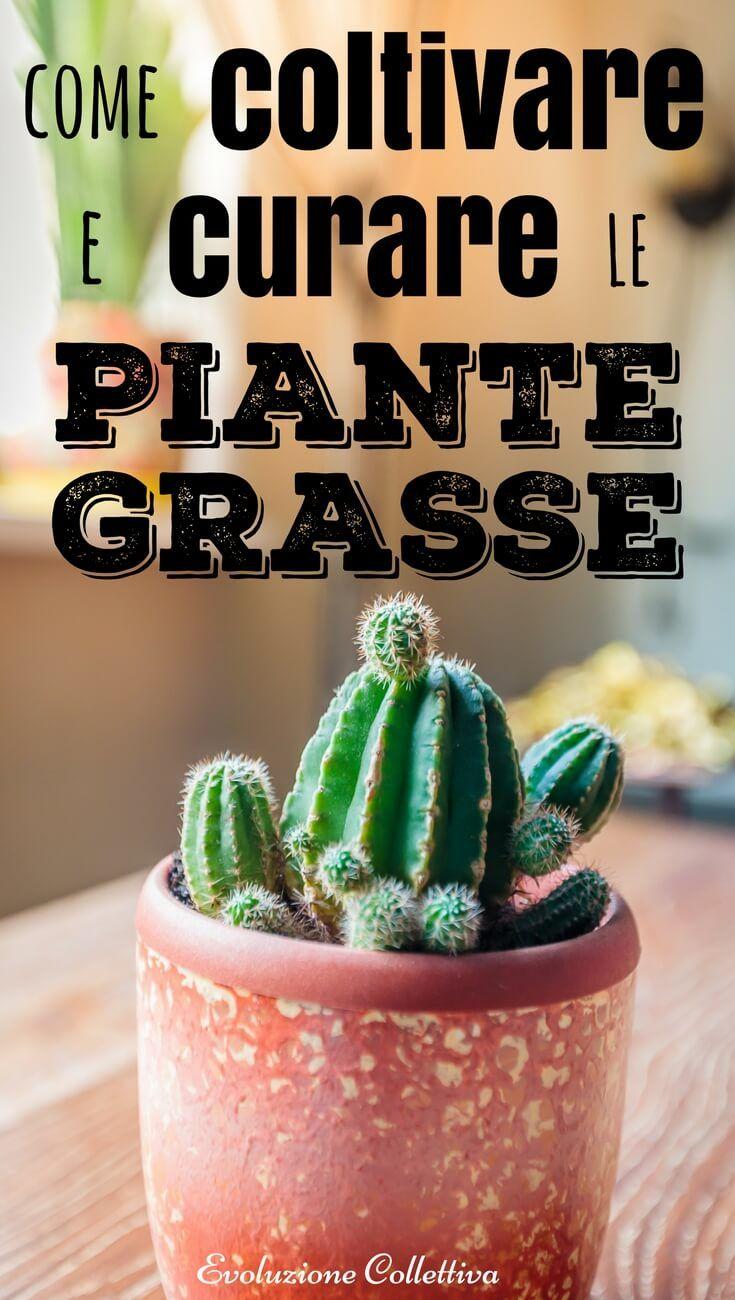 Come Curare Le Piante come curare e coltivare le piante grasse | piante grasse