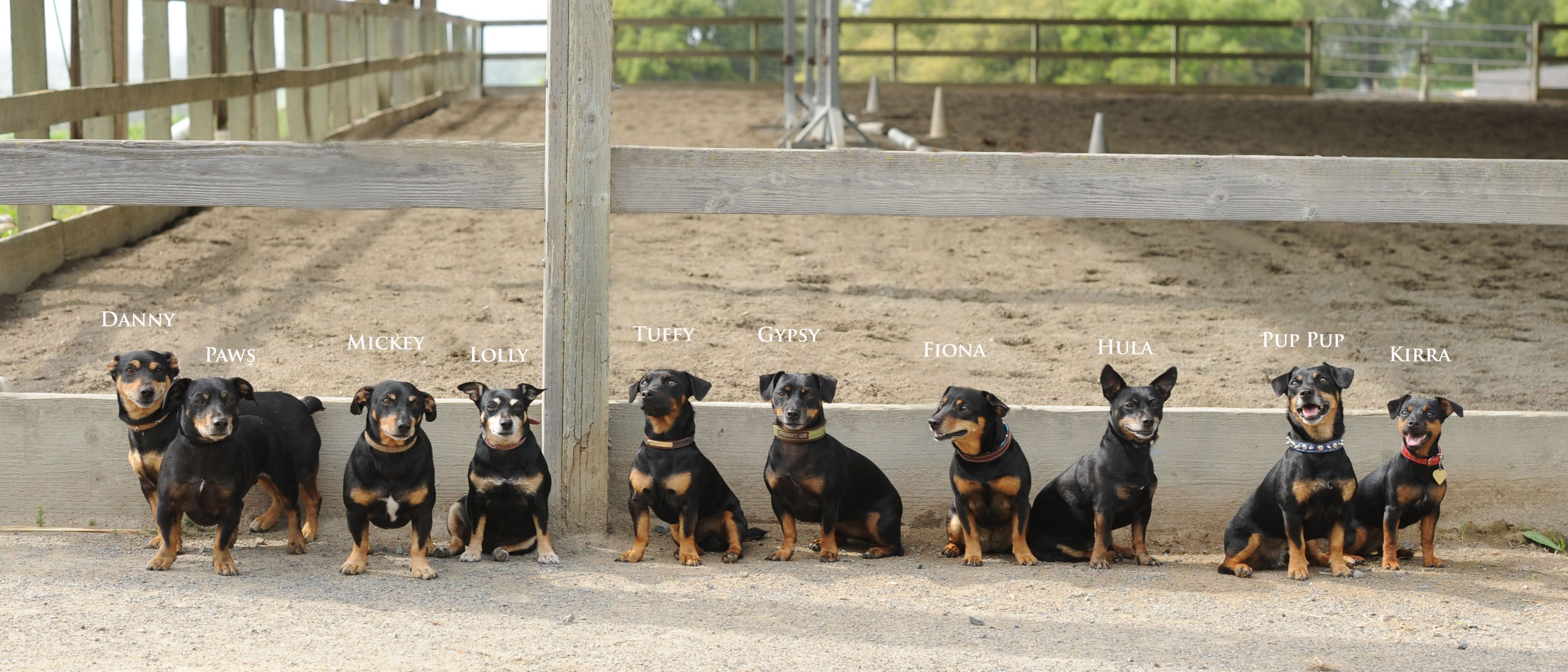 Tipperary Terriers Animal Photos Dogs Ireland Terriers Black