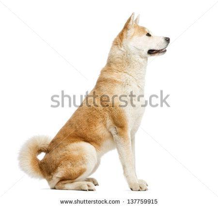 side view dog google canine pinterest dog. Black Bedroom Furniture Sets. Home Design Ideas
