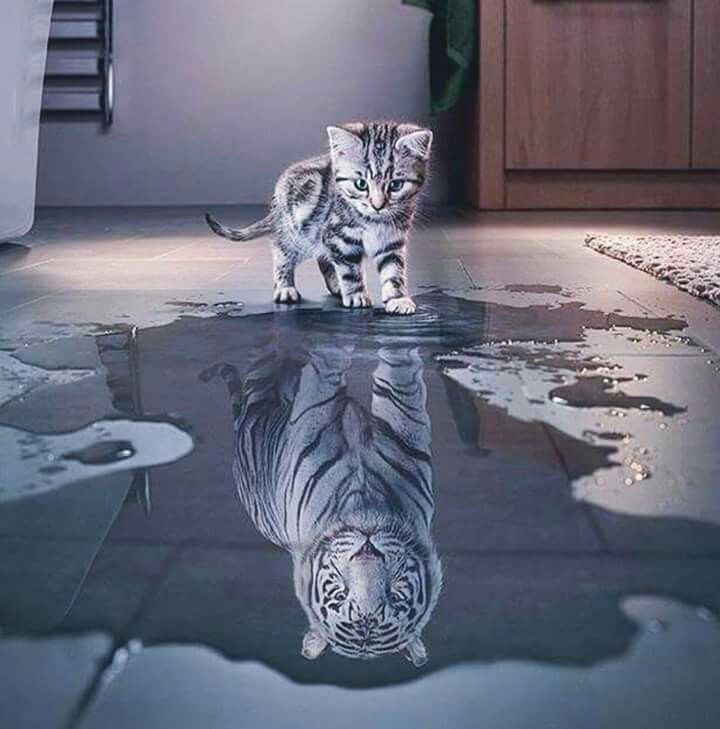 Fond D Ecran Reflet Chat Et Tigre Lumineux Image Chat