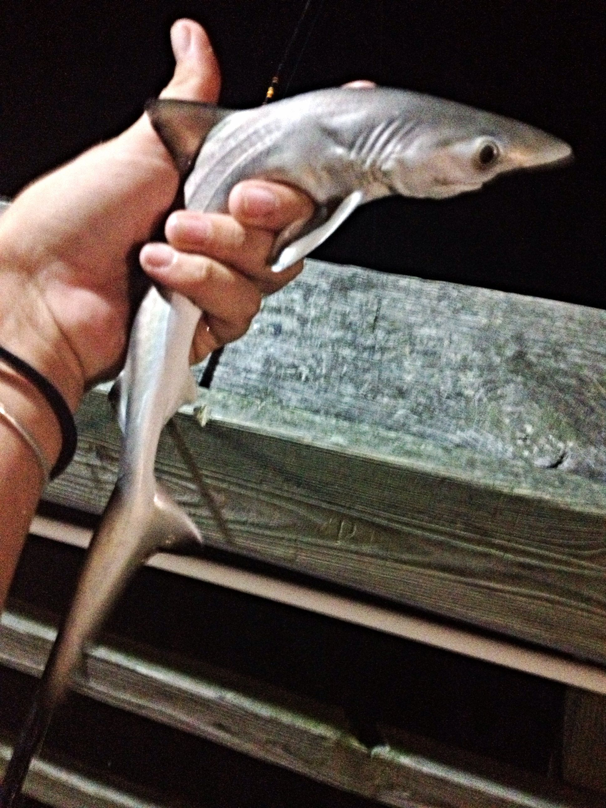 Shark Fishing Off Sunset Beach Pier Nc Saltlife