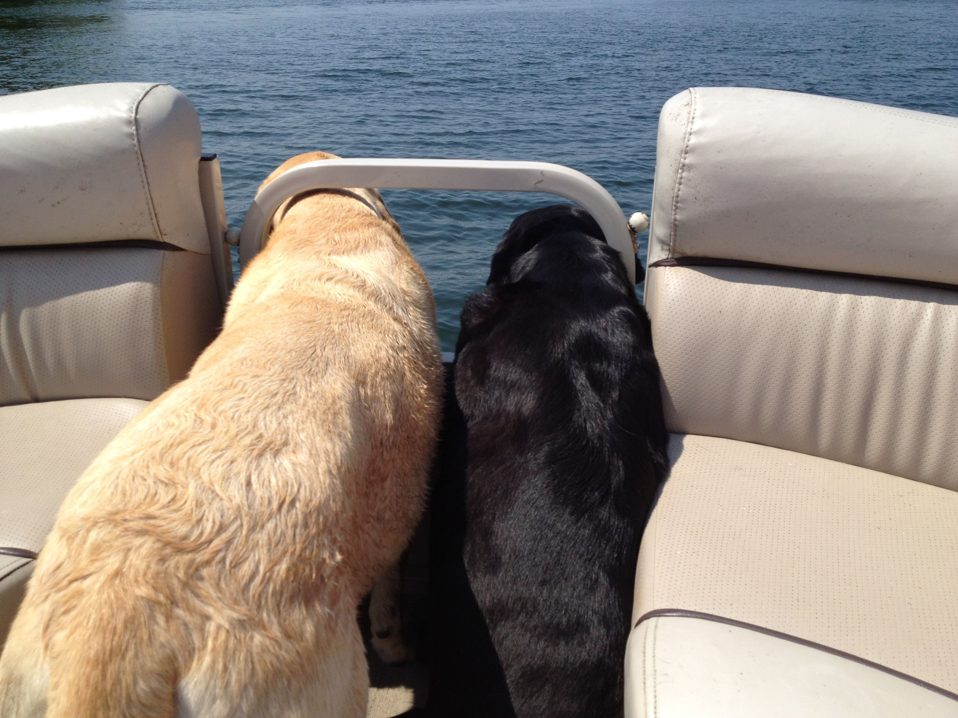 Pin By Ld1970 On Vacation Dogs Animals Vacation