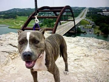 Aspen, currently up for adoption from Austin Pets Alive