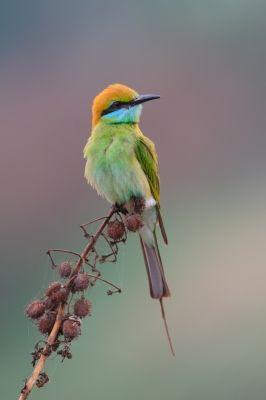 Birdwatching How To Bird Watch Ornithology Bird Bee Eater Bird Watching
