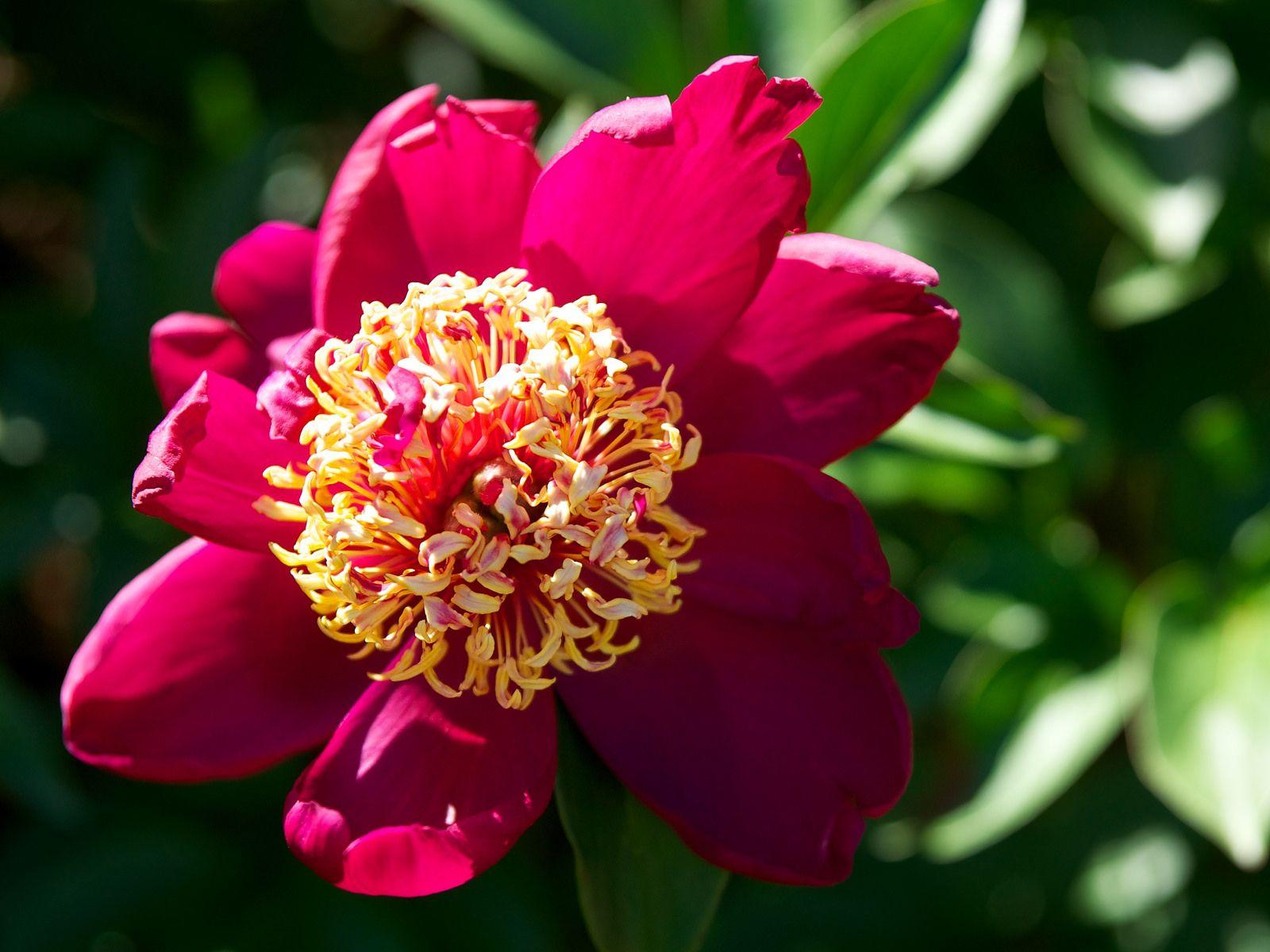 Lewis Ginter Botanical Garden Lewis ginter botanical garden