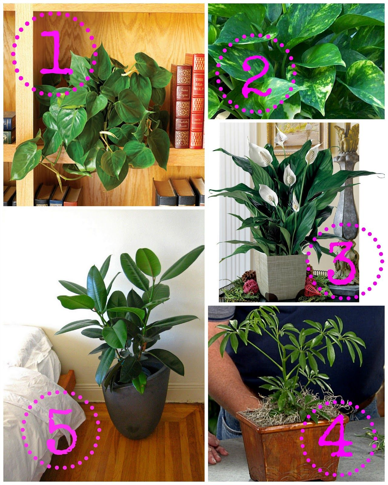 Keeping House Plants Alive Shine Your Light Plants Inside Plants House Plants