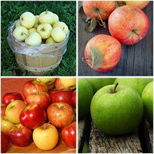 4 In 1 Apple Tree Apple Tree Fast Growing Trees Fast Growing Evergreens