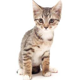 mad cat inspector gadget