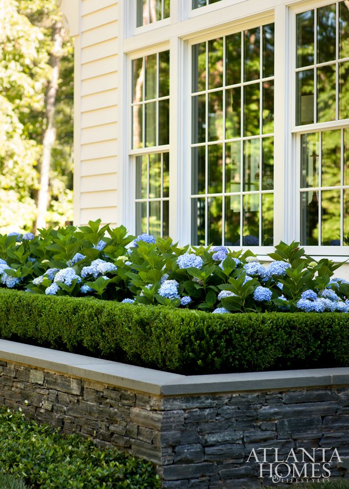 The integrated breakfast nook offers impressive views of the gardens. It features antique chairs from the couple's former abode and a new table from Holland & Company. Breakfast room views consist of immaculate gardens, including these 'Nikko Blue' hydrangeas with a Korean boxwood hedge.