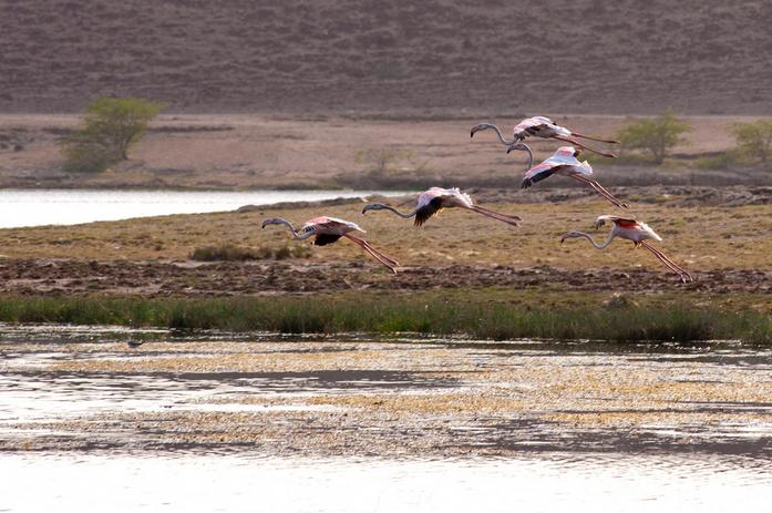 KhorRori Lagoon Dohfar Salalah - Oman