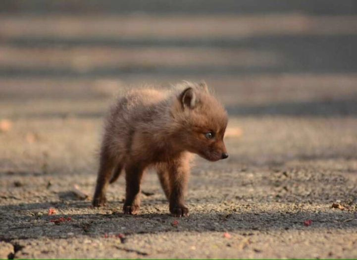 Father and Daughter Find Adorable Baby Foxes in Their Backyard - My Modern Met