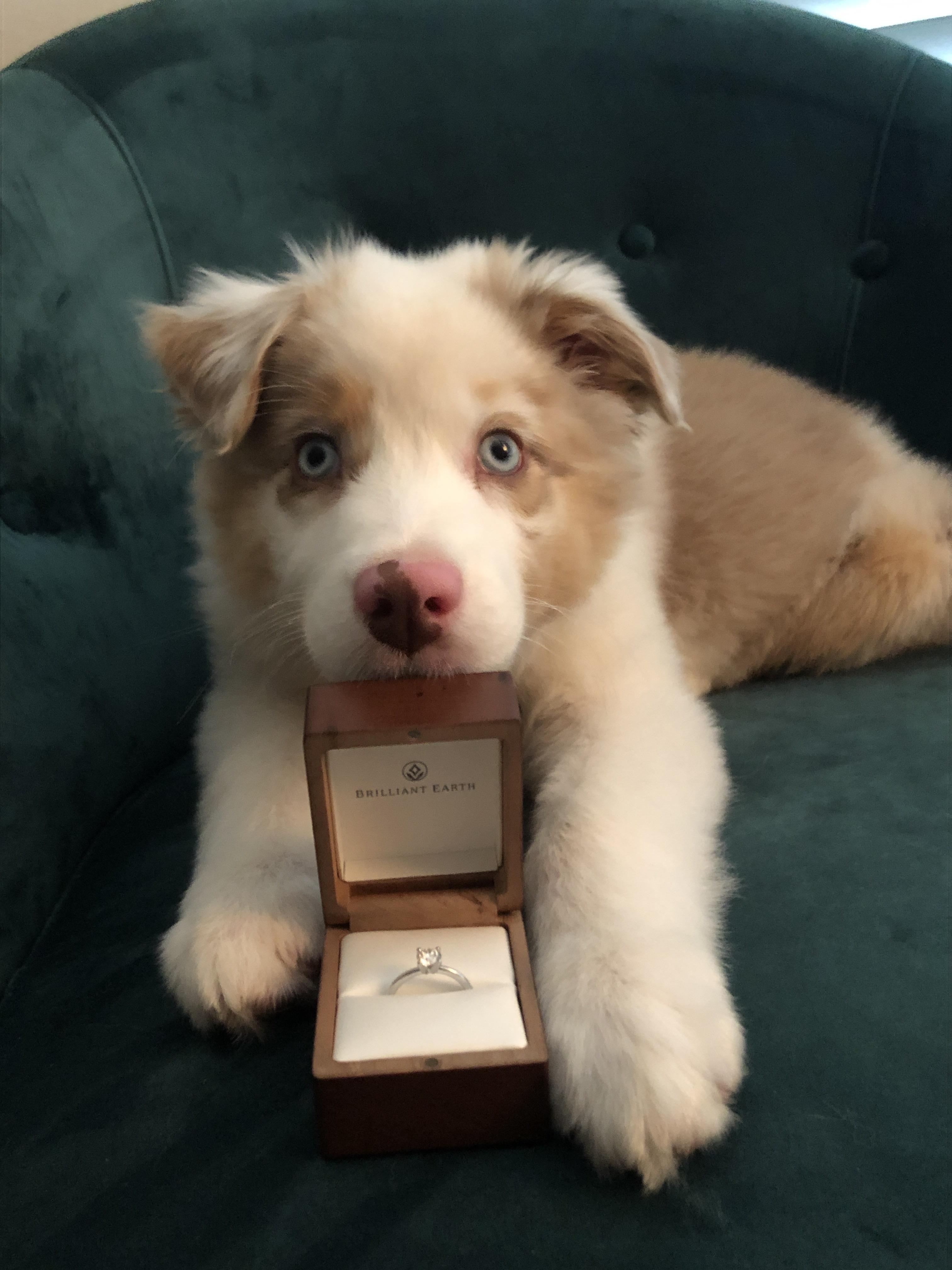 Wish Me Luck Reddit Cute Animal Photos Reddit Funny Puppies