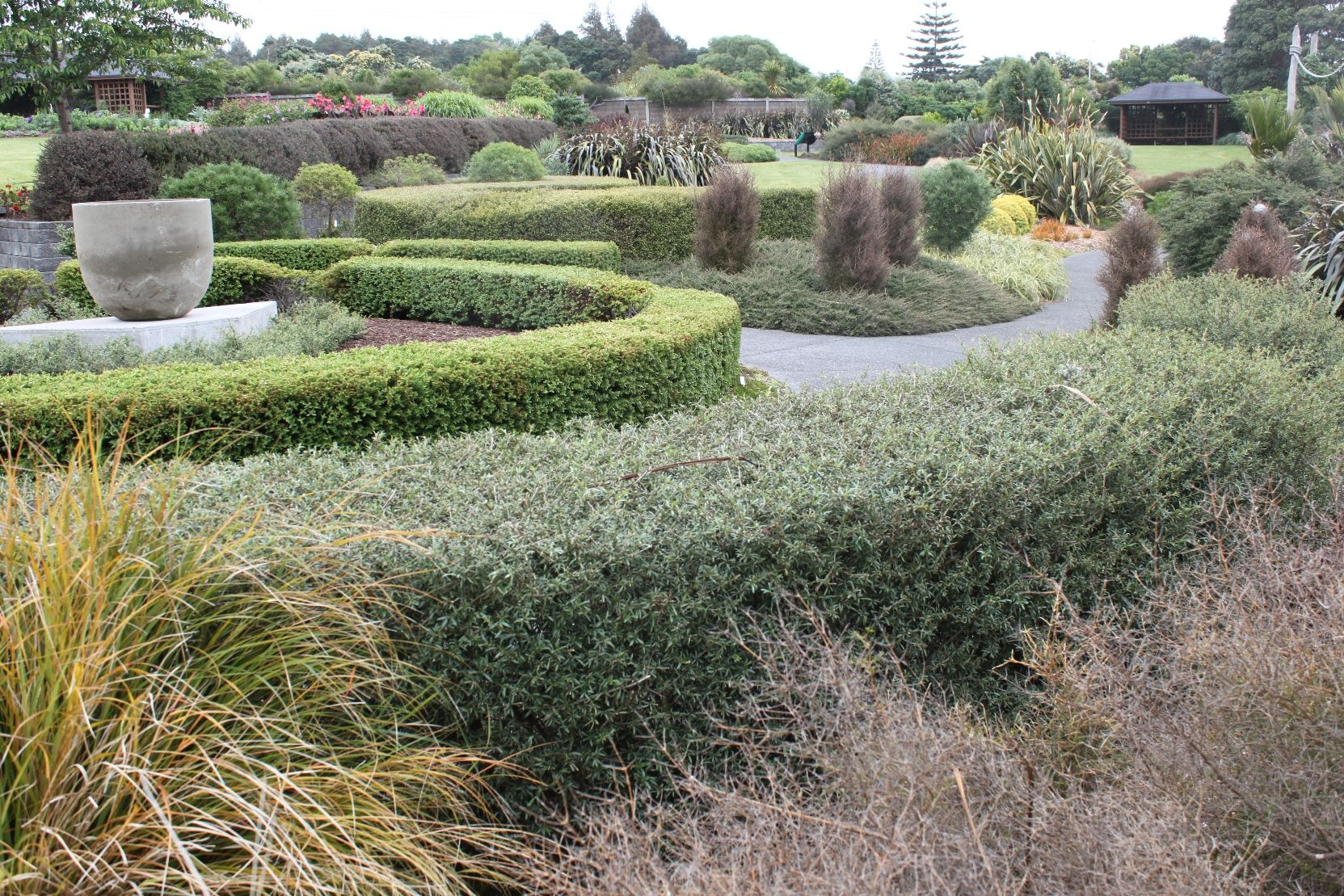 Native Plant Ideas - hedging examples | Plants, Garden ...