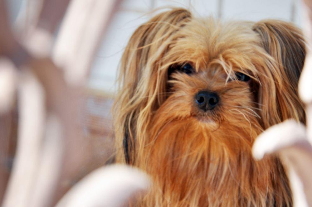My dog! Amo muito Lilo Lindo!