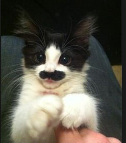 Awesome cat! I WANT IT!!!!!!!!!