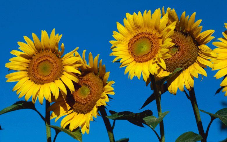 GOOD MOOD GARDEN 10 Mood-Boosting Foods You Can Grow