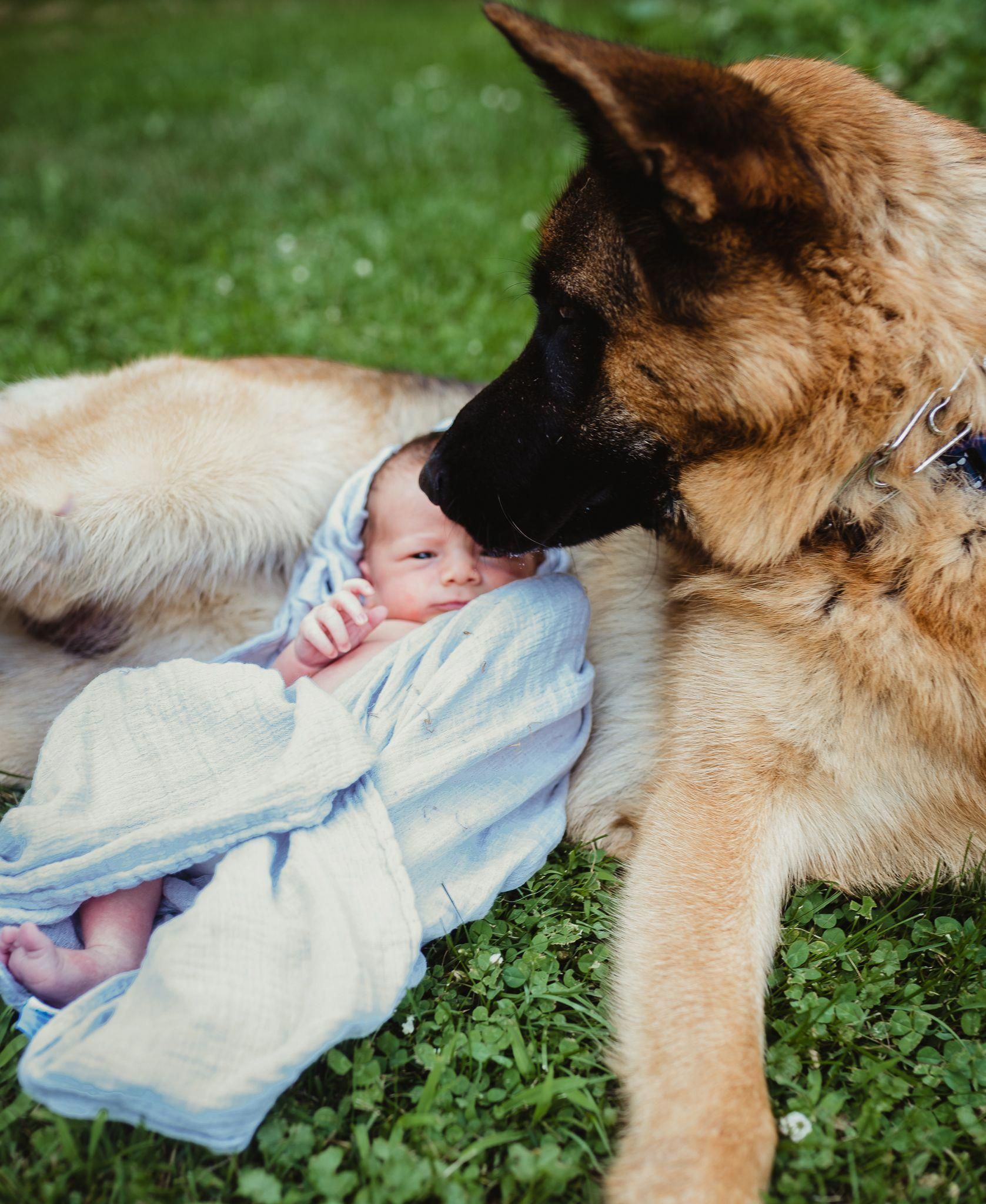 Acquire great on german shepherd puppies