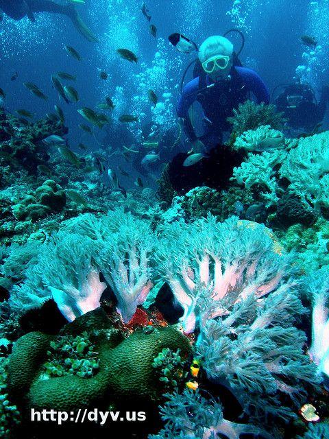 Diver Training Ariel Abonal Diving Scuba Diving Scuba Diving Courses